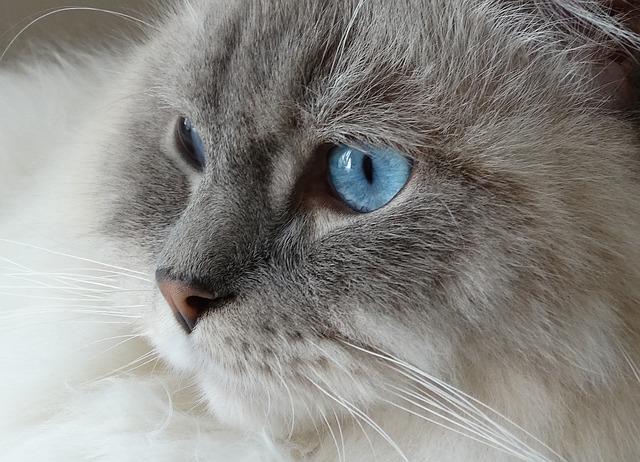 cat died suddenly eyes open